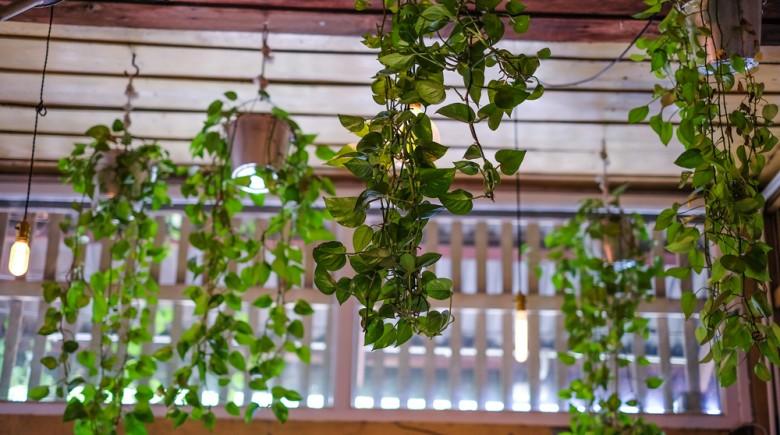 garden-home-improvement